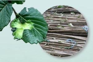 Haselruten aus nachhaltiger Ernte