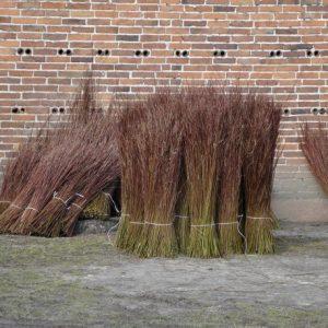 Flechtweide Flechtruten Weide